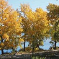 Осенняя роскошь... :: Тамара Бедай