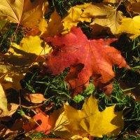 Осенние листья :: Наталья Герасимова