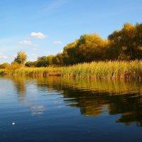 Река осенью.. :: Владимир Сквирский
