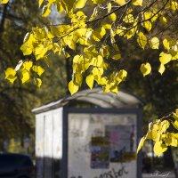 И осень прекрасна,когда на душе весна... :: ТатьянА А...