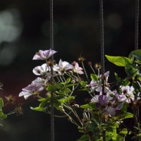 Чудесно цветут :: Татьяна Иванова