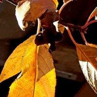 Осень :: Galina Belugina
