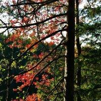 """""""Дерева наряд сменили, ветки листья опустили. Вот и началась пора листопадов! Красота!"""" :: Ирэн"""