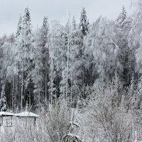 Лес зимний :: Алексей Екимовских