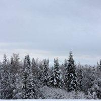 Пришла зима :: Алексей Екимовских
