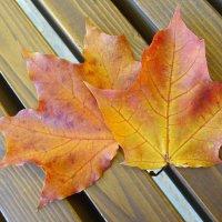 Этюд с кленовыми листьями :: Ирина Via