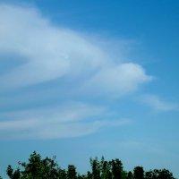 На что похожи облака? 2 - ласточка :: Светлана Рябова-Шатунова