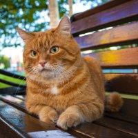 Рыжий кот :: Мария Белая
