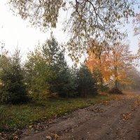 "Из серии ""Утро туманное..."" :: Елена Струкова"