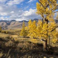 Алтайская осень :: Юрий Казарин