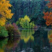 Осень — время ярких чувств, буйства красок, вкусов и уютных воспоминаний. :: Ольга Русанова (olg-rusanowa2010)