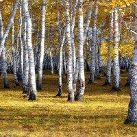 Пора  листопада :: Геннадий С.