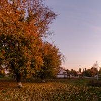 Осень в лучах заката. :: Владимир M