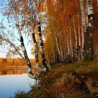 Я русской берёзе до самых корней поклонюсь... :: Нэля Лысенко
