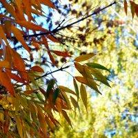 Осень цветастая :: Артур Хороший