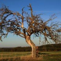 Деревья умирают стоя. :: Jakob Gardok