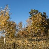 осенний лес :: Лариса Батурова
