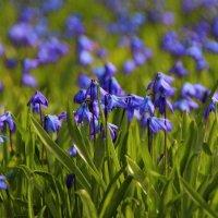 В милых цветах синь лучащихся небес.. :: Татьянка *