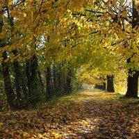 дорожка в осень :: Валентина Папилова