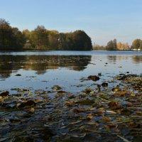 Осень на реке :: Сергей Щеглов
