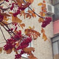 Осень на фоне кирпичного дома. :: Михаил Полыгалов