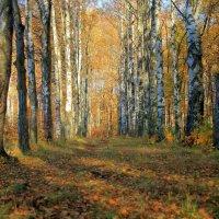 Осенний пейзаж :: Александр Алексеенко