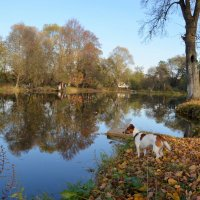 Погружение в природу 1 ...осень и собака... :: Наталья Natupans
