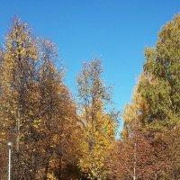 Осень! :: ирина