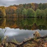 осень :: Андрей ЕВСЕЕВ
