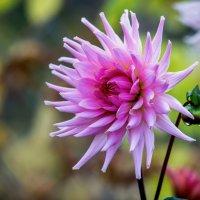 вчера в саду (14 октября). :: Peteris Kalmuks