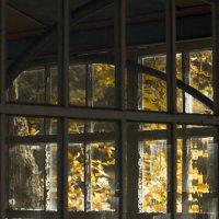 осень в окнах 18 :: Геннадий Свистов