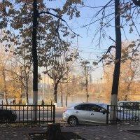 За окном осень. :: Светлана Ященко