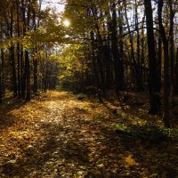 Потому что - Золотая Осень :: Андрей Лукьянов