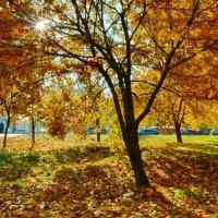Золотая осень в городе :: Olcen Len
