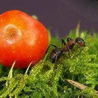 Из жизни муравьев :: Александр Орлов
