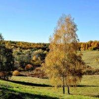 Осень золотая... :: Анатолий Колосов