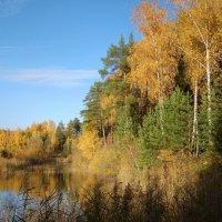 Октябрь в подмосковном лесу :: Татьяна Георгиевна