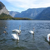 Хальштатское озеро...в Австрии...... :: Galina Dzubina