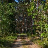 В лес :: Алексей (GraAl)