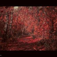 красный лес :: Ольга (Кошкотень) Медведева