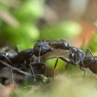 Кормление муравьев :: Татьяна Золотых
