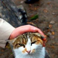 Уличный котик :: ИгорьОк Бородин