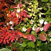 Яркие краски осени :: Надежда