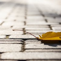 #осень :: GeraS   Photo