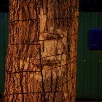 Дерево. :: Ильсияр Шакирова