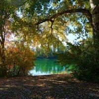 Осень... :: Galina Dzubina