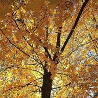 Солнечный октябрь :: Ирина Via