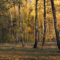 В осеннем лесу :: Вячеслав Маслов