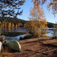 Золотая осень на берегу озера. :: Ольга Саранцева