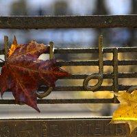 Осенний блюз :: Татьяна Панчешная